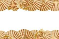 Trame de Seashell photographie stock