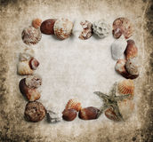 Trame de Seashells Photos stock