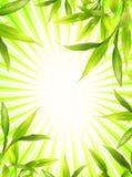 Trame en bambou de centrale illustration libre de droits