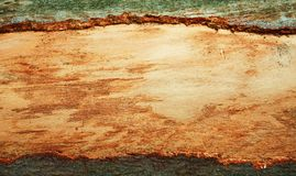 Trame en bois normale d'écorce Image libre de droits