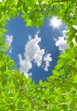 Trame en forme de coeur de congé vert Images libres de droits