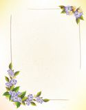 Trame florale Photographie stock