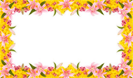 Trame florale Photo stock
