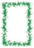 Trame florale avec des anémones Photos libres de droits