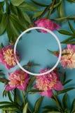 Trame ronde Pivoines roses sur le fond bleu Photo stock