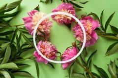 Trame ronde Pivoines roses sur le fond vert Images stock