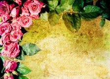 Trame rose de cru Images stock