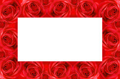 Trame rose de rouge Image stock