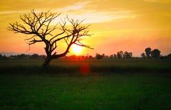 tramonti Fotografia Stock Libera da Diritti