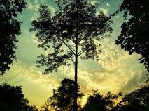 Tramonti degli alberi Fotografia Stock