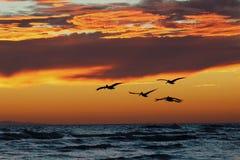 Tramonti della spiaggia Fotografia Stock