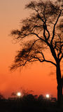Tramonto 1079 dell'alberino Fotografia Stock Libera da Diritti