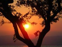 tramonto fotografia de stock
