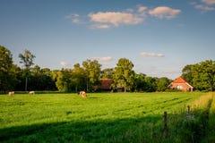 Tramonto ad un paesaggio olandese tipico Twente, Overijssel dell'azienda agricola di estate Immagine Stock Libera da Diritti