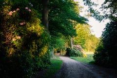 Tramonto ad un percorso romantico nel paesaggio Twente di estate di Duch fotografia stock