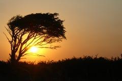 Tramonto in Africa Fotografia Stock Libera da Diritti