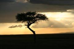 Tramonto Africa Immagine Stock Libera da Diritti