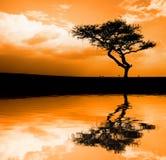 Tramonto africano Fotografie Stock Libere da Diritti