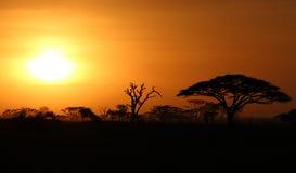 Tramonto africano Fotografia Stock