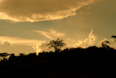 Tramonto africano (Kenya) Fotografia Stock Libera da Diritti