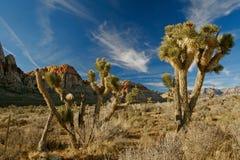 Tramonto al canyon rosso della roccia immagini stock