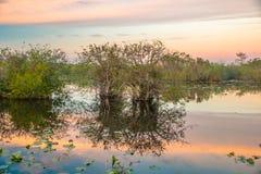 Tramonto al parco nazionale III dei terreni paludosi fotografia stock libera da diritti