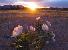 Tramonto al ` s Memorial Park del veterano nella città di Boulder, Nevada Fotografia Stock Libera da Diritti