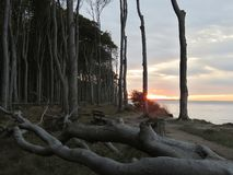 Tramonto alla foresta del fantasma al Mar Baltico Germania Nienhagen fotografia stock