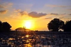 Tramonto alla foresta della mangrovia Fotografie Stock