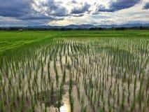 Tramonto alla risaia Fotografie Stock Libere da Diritti