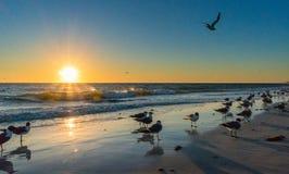 Tramonto alla spiaggia con gli uccelli Fotografia Stock Libera da Diritti