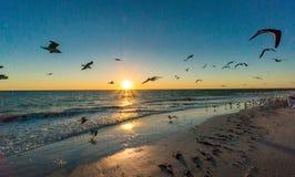 Tramonto alla spiaggia con gli uccelli Fotografie Stock