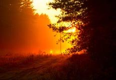 Tramonto arancio alla foresta dopo pioggia Fotografia Stock