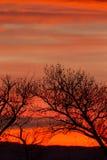 Tramonto arancio ed alberi Immagini Stock