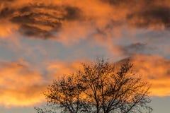 Tramonto arancio ed albero Fotografie Stock Libere da Diritti