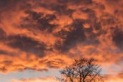 Tramonto arancio ed albero Fotografia Stock Libera da Diritti