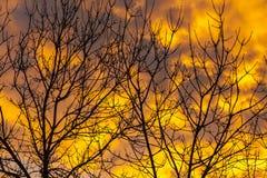 Tramonto arancio ed albero Immagine Stock