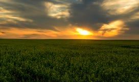 Tramonto arancio sopra il campo verde Fotografia Stock Libera da Diritti