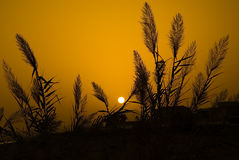 Tramonto arancione e piante nere Fotografia Stock Libera da Diritti