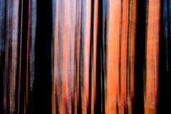Tramonto astratto attraverso gli alberi vaghi moto Fotografie Stock