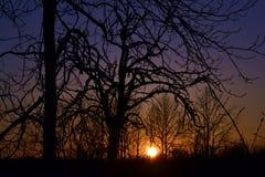 Tramonto attraverso gli alberi Immagine Stock Libera da Diritti
