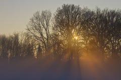 Tramonto attraverso gli alberi e la nebbia Fotografie Stock