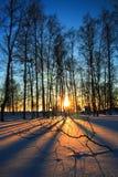 Tramonto attraverso gli alberi sfrondati in inverno Fotografie Stock Libere da Diritti