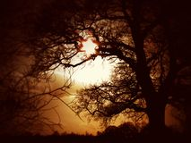 Tramonto attraverso il vecchio albero di faggio immagine stock