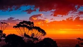 Tramonto australiano del sud iconico con i gumtrees Fotografia Stock Libera da Diritti
