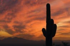 Tramonto brillante sopra Sonoran Deser del cactus e dell'Arizona del Saguaro Fotografie Stock Libere da Diritti