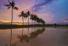 Tramonto bruciante con la riflessione dell'albero tropicale Fotografia Stock Libera da Diritti