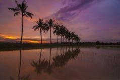 Tramonto bruciante con la riflessione dell'albero tropicale Fotografia Stock