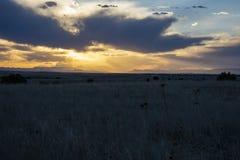 Tramonto celeste e prateria di Colorado immagine stock libera da diritti