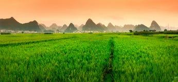 Tramonto cinese del giacimento del riso con le formazioni di morfologia carsica Immagini Stock